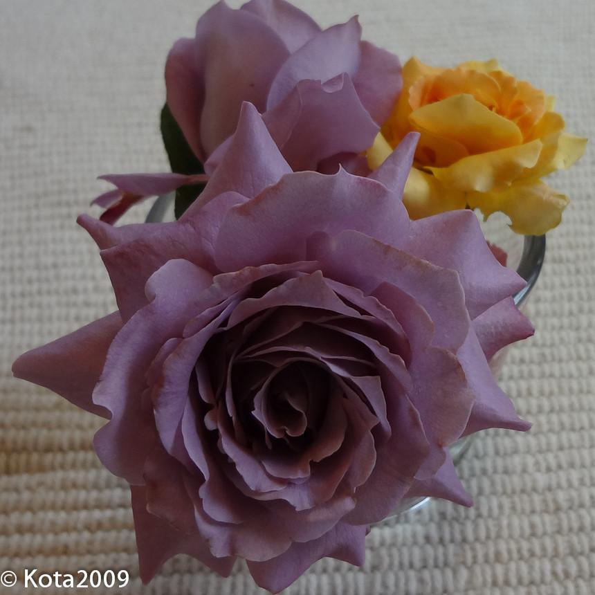 f:id:kota2009:20120806134948j:image:w240