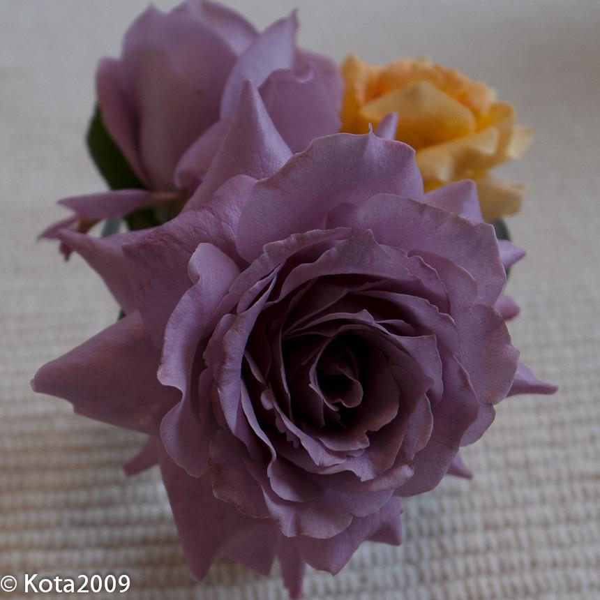 f:id:kota2009:20120806140607j:image:w240