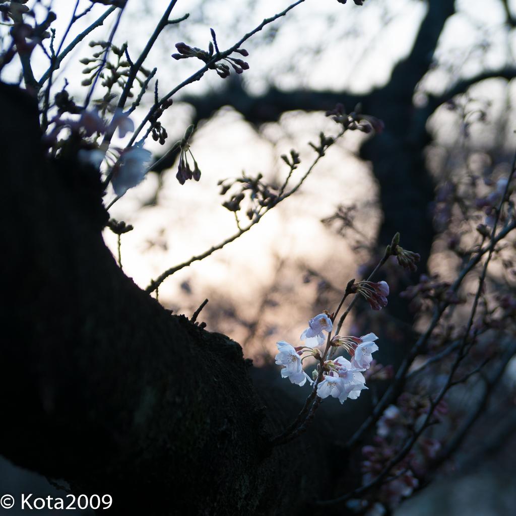 f:id:kota2009:20170402173327j:plain