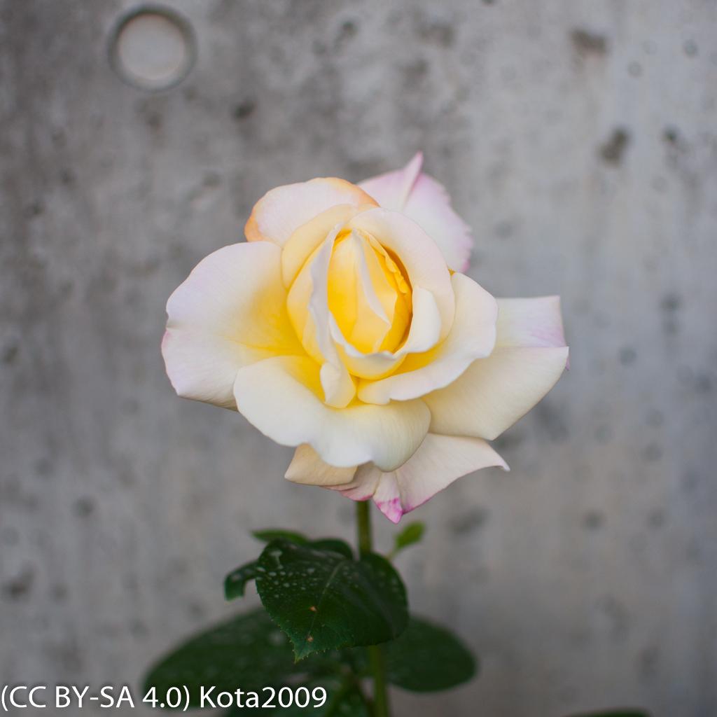 f:id:kota2009:20170521182052j:image:w640