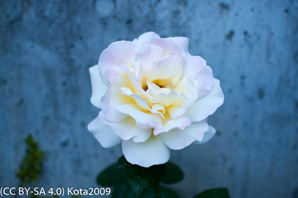 f:id:kota2009:20170524184138j:image:w640