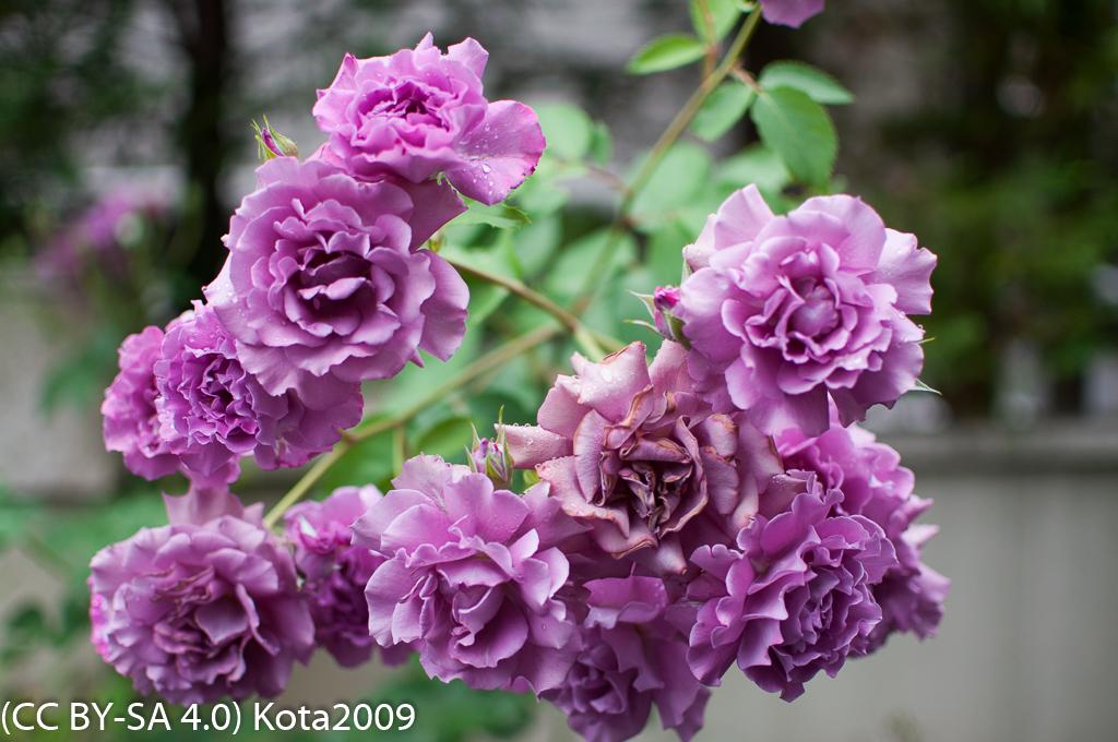 f:id:kota2009:20170525053849j:image:w640