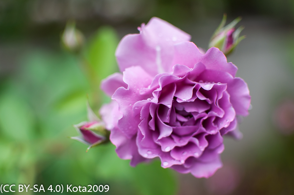 f:id:kota2009:20170525053901j:image:w640
