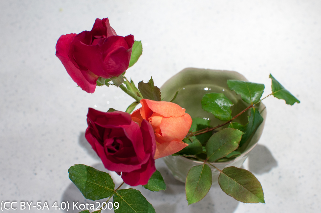f:id:kota2009:20170709210254j:image:w640