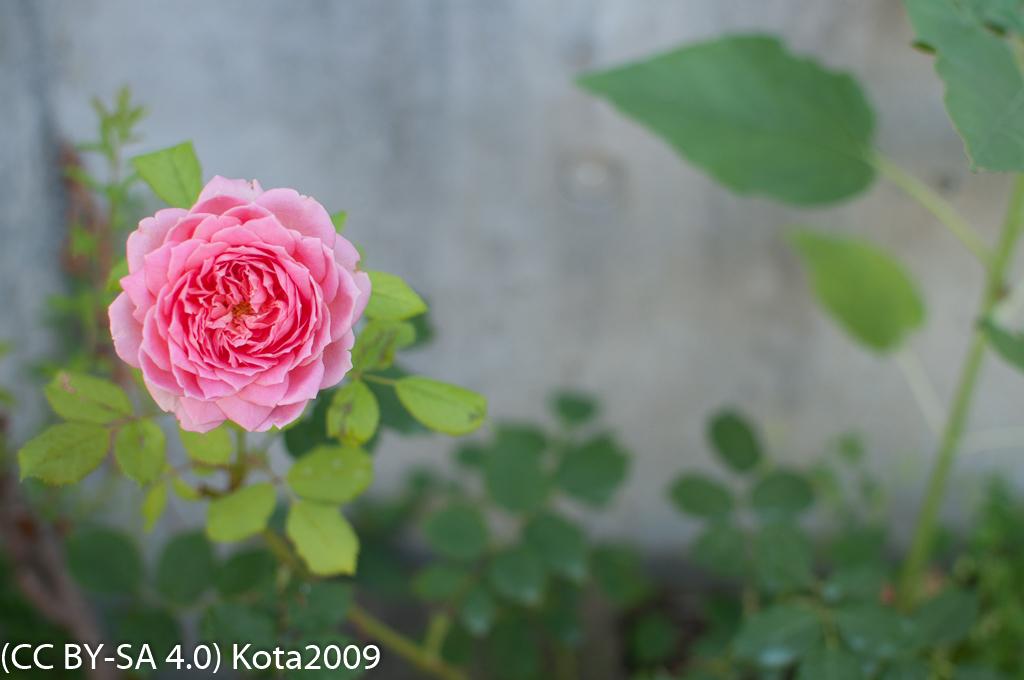 f:id:kota2009:20170715073659j:image:w640