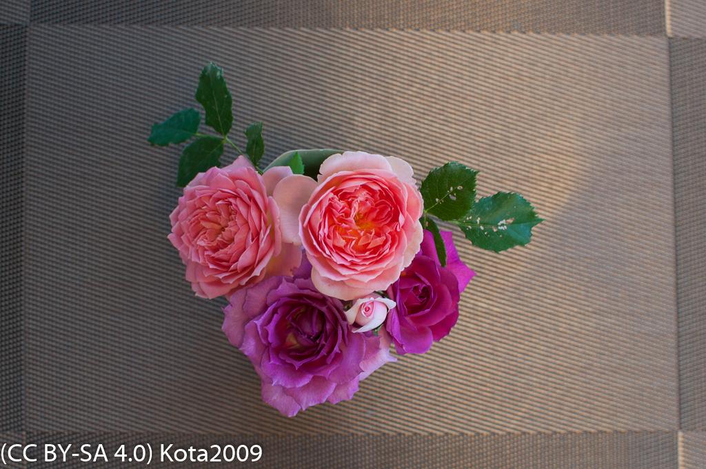 f:id:kota2009:20170715074428j:image:w640