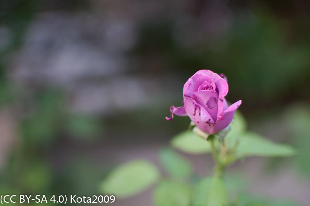 f:id:kota2009:20170719184651j:image:w640