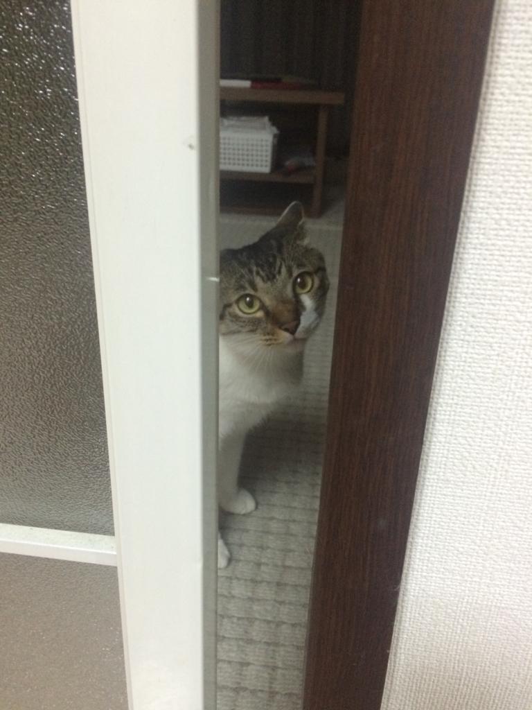 f:id:kota_uni:20170628234829j:plain