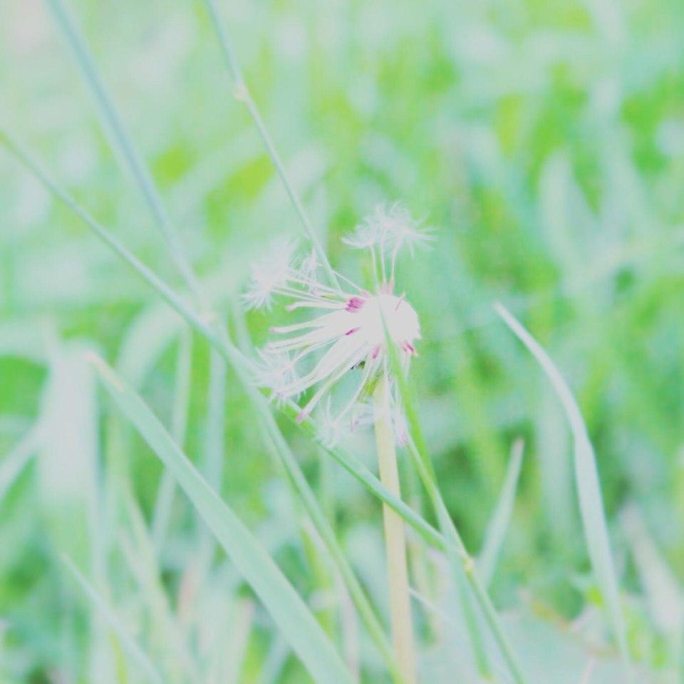f:id:kotahada:20200610112421j:plain