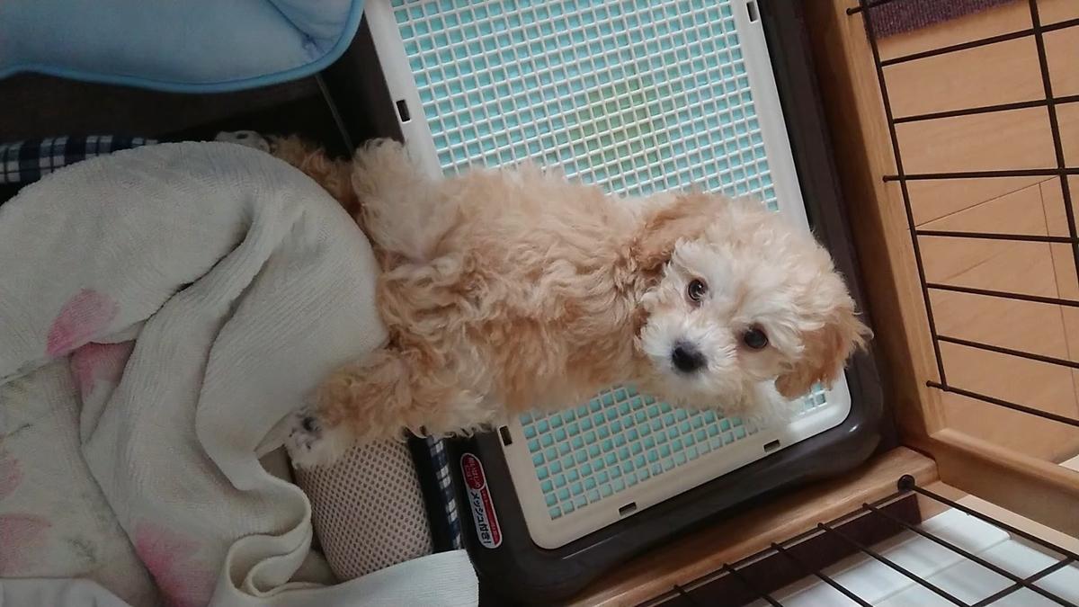 f:id:kotaro-dog:20210226012226j:plain