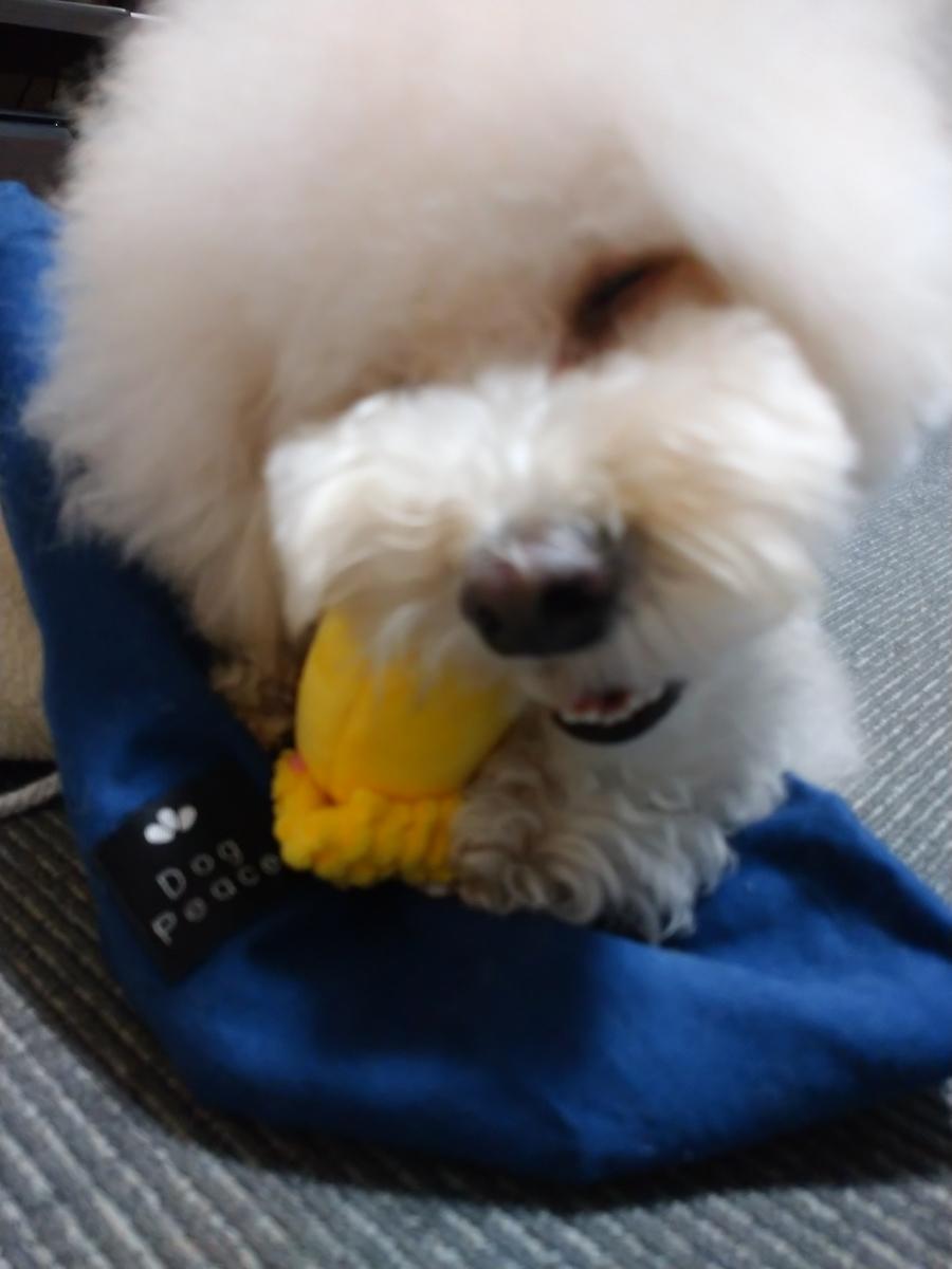f:id:kotaro-dog:20210227222932j:plain