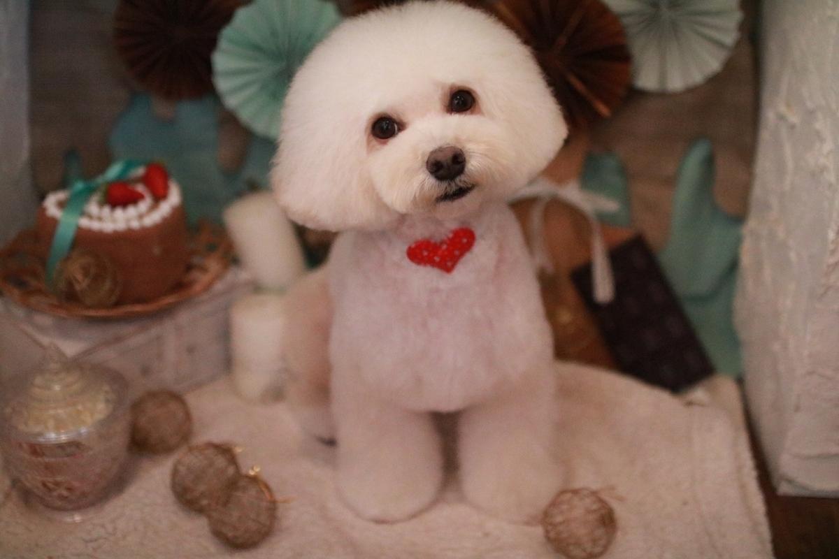 f:id:kotaro-dog:20210228005950j:plain