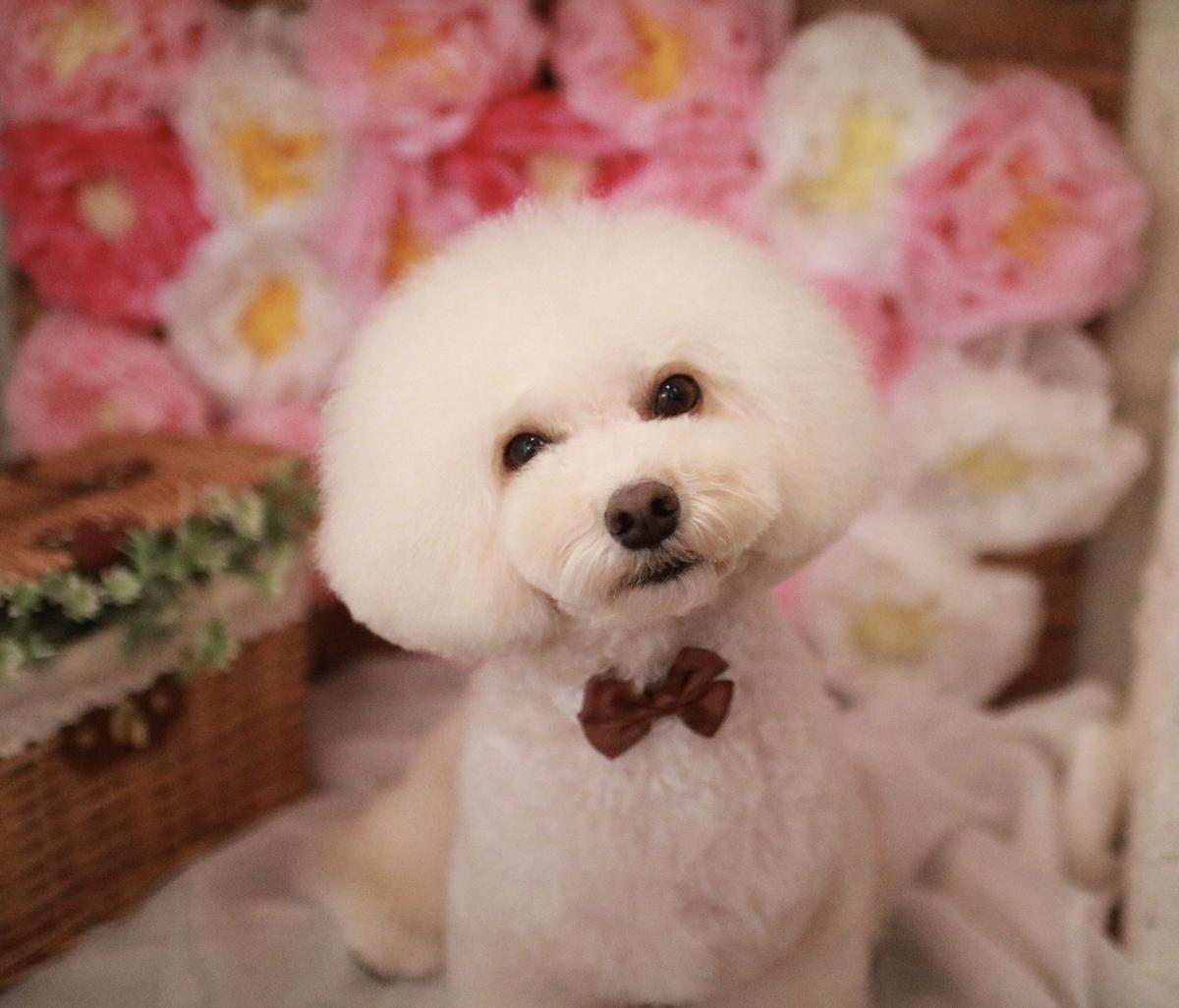 f:id:kotaro-dog:20210308005133j:plain