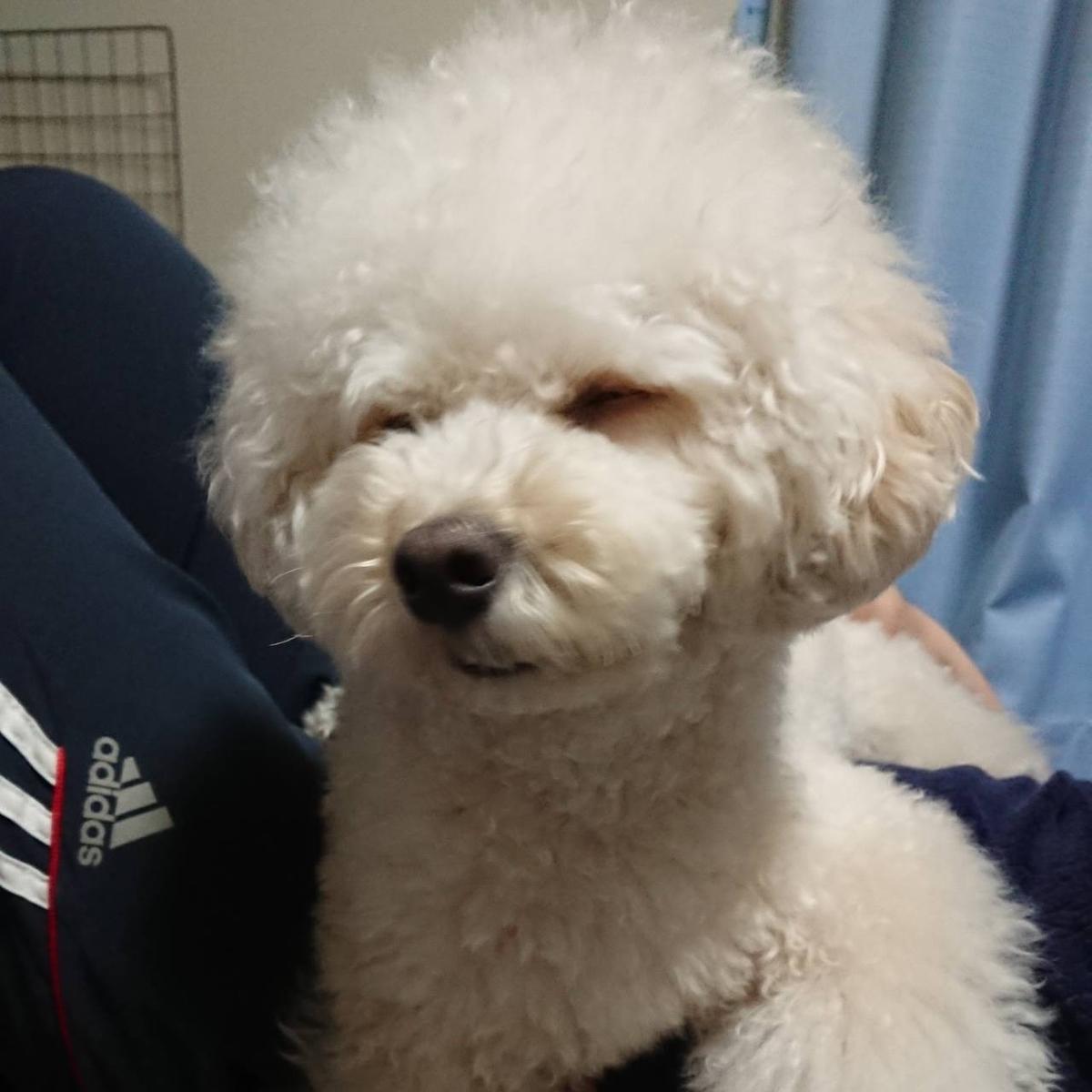 f:id:kotaro-dog:20210317021734j:plain
