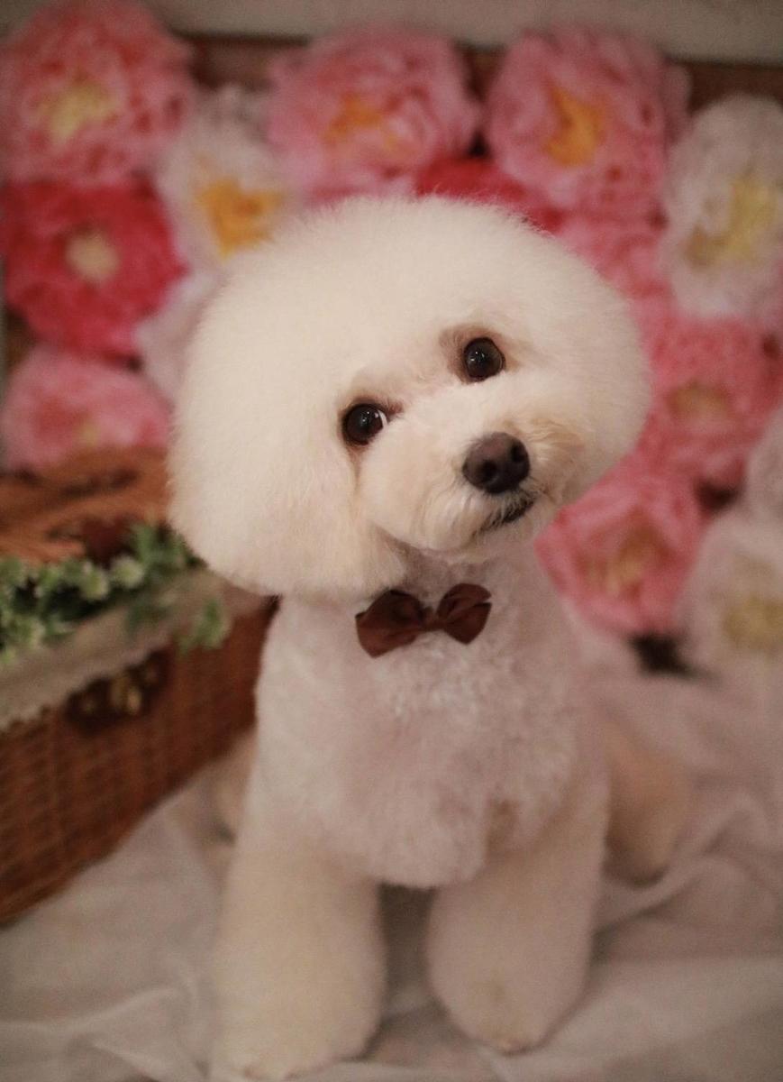 f:id:kotaro-dog:20210321041319j:plain