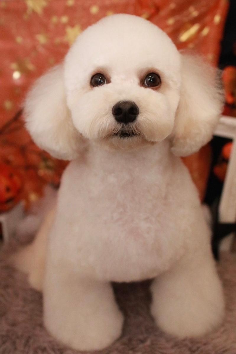 f:id:kotaro-dog:20210403231035j:plain