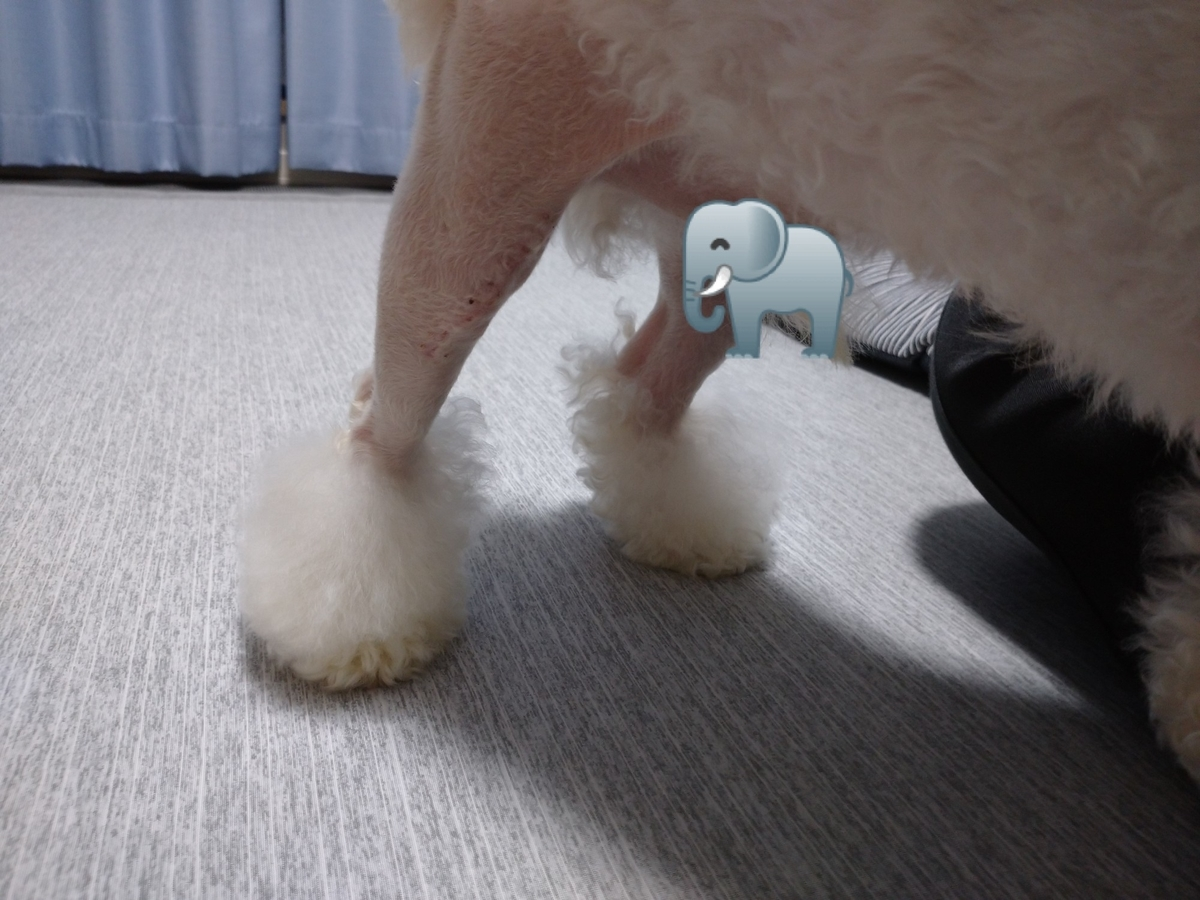 f:id:kotaro-dog:20210411005633j:plain