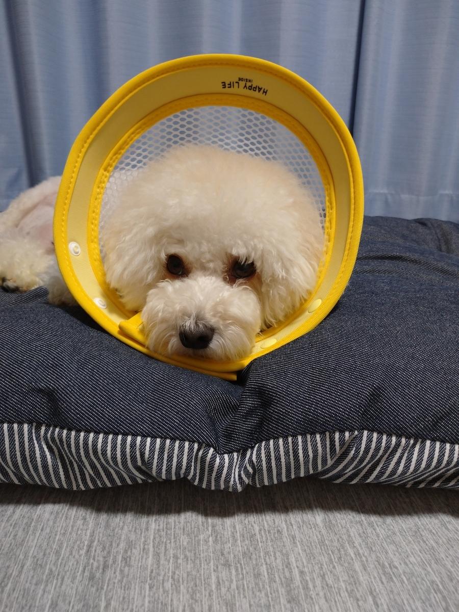 f:id:kotaro-dog:20210411014016j:plain