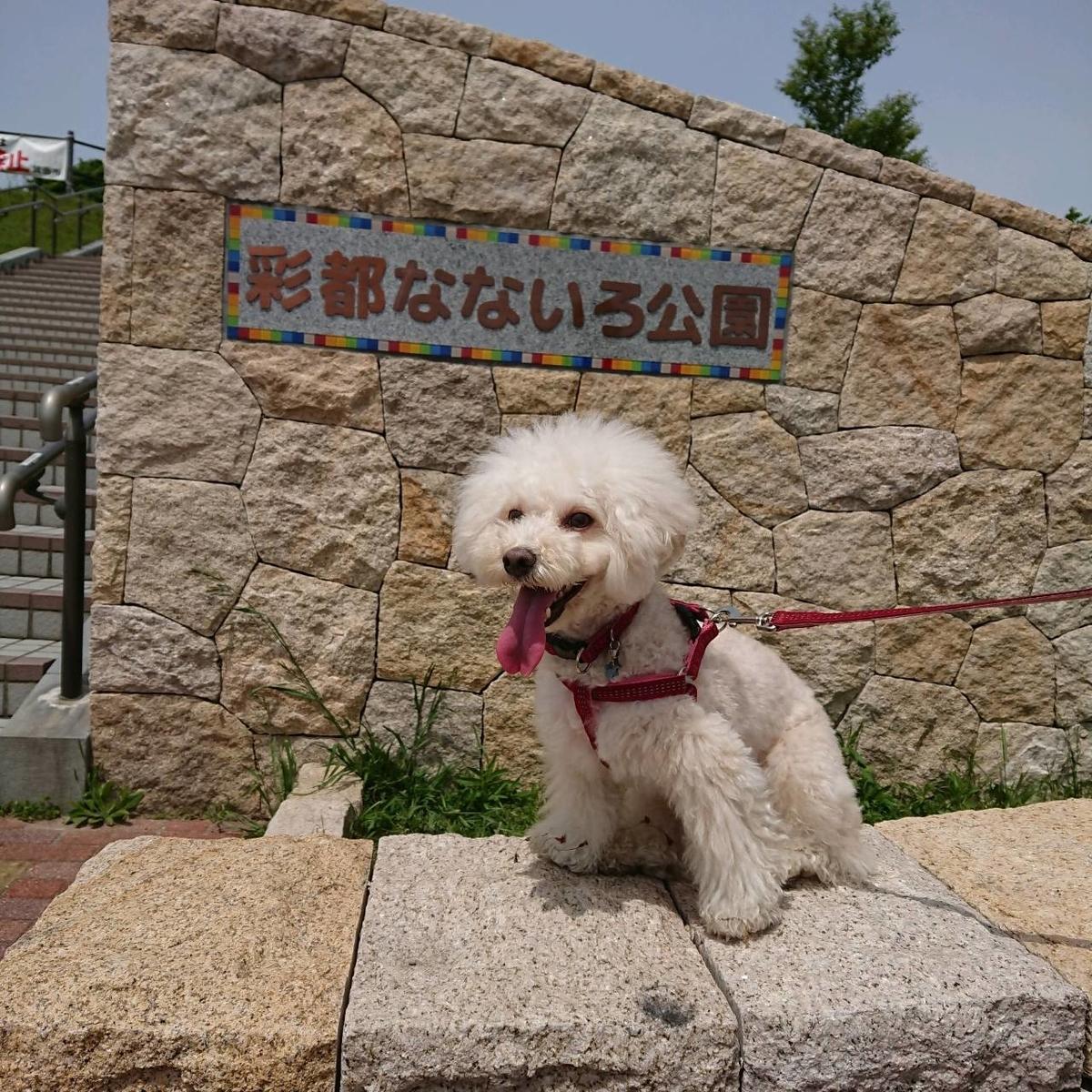 f:id:kotaro-dog:20210430235622j:plain