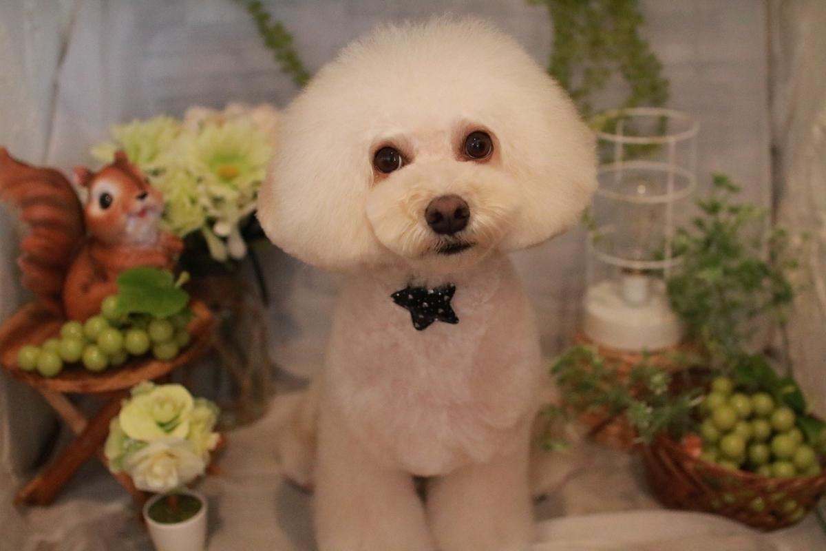 f:id:kotaro-dog:20210515225041j:plain