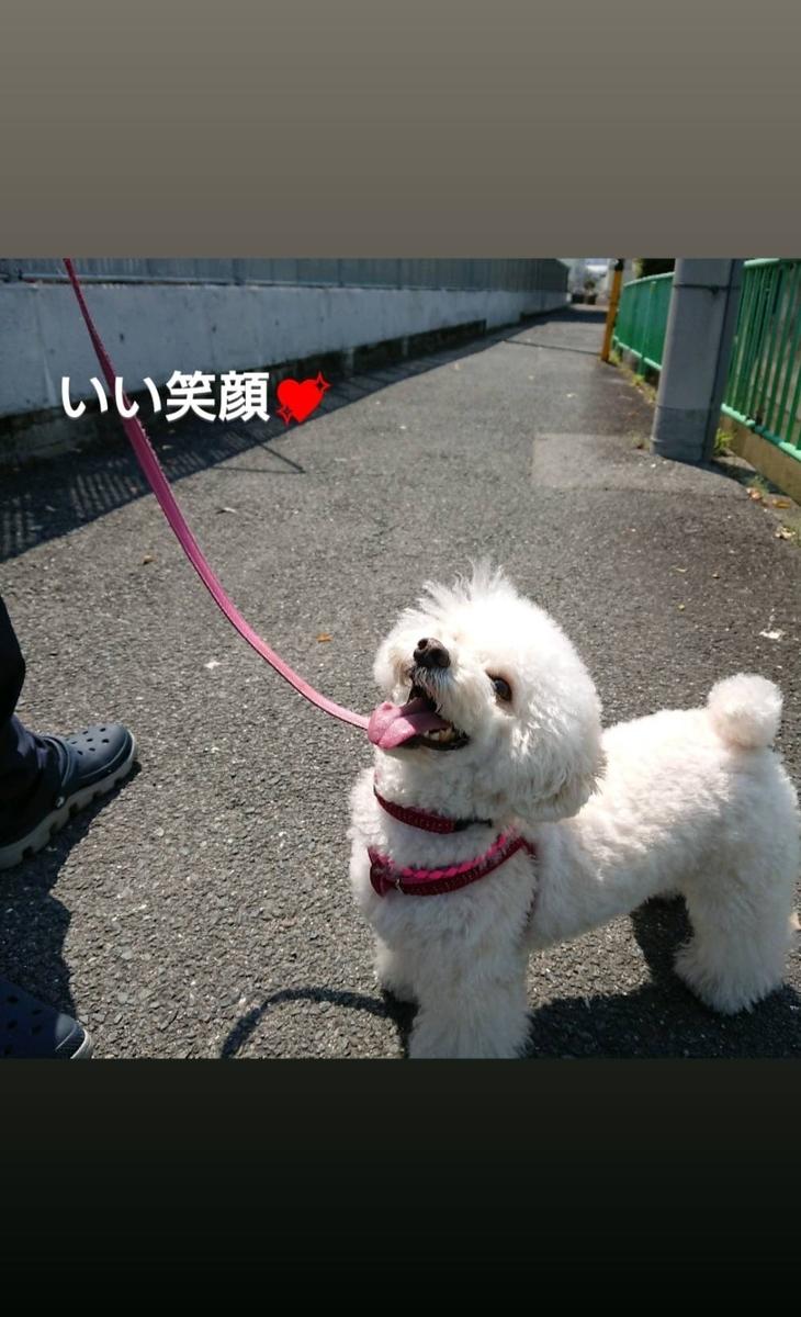 f:id:kotaro-dog:20210516002441j:plain