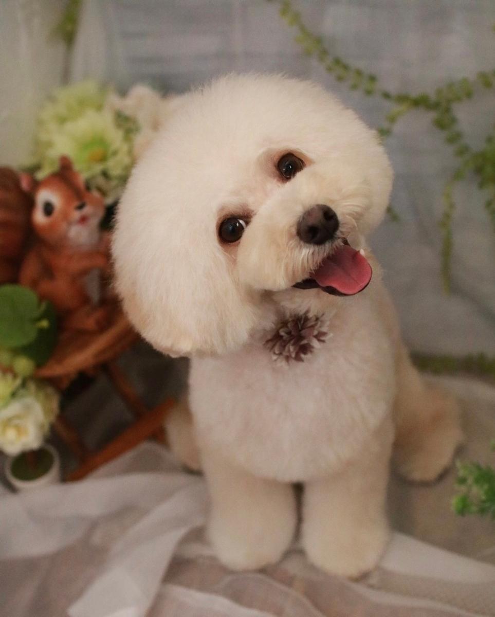 f:id:kotaro-dog:20210607000859j:plain