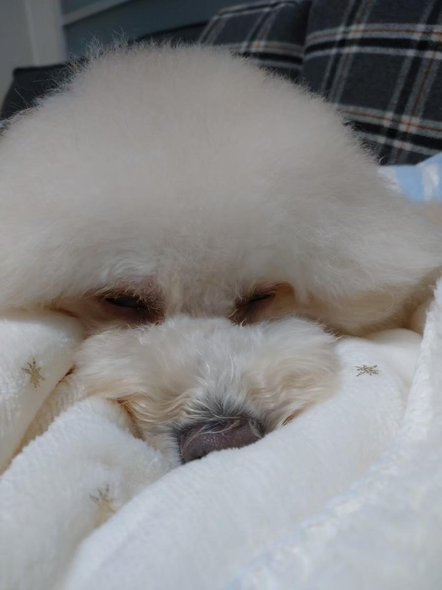 f:id:kotaro-dog:20210615012559j:plain