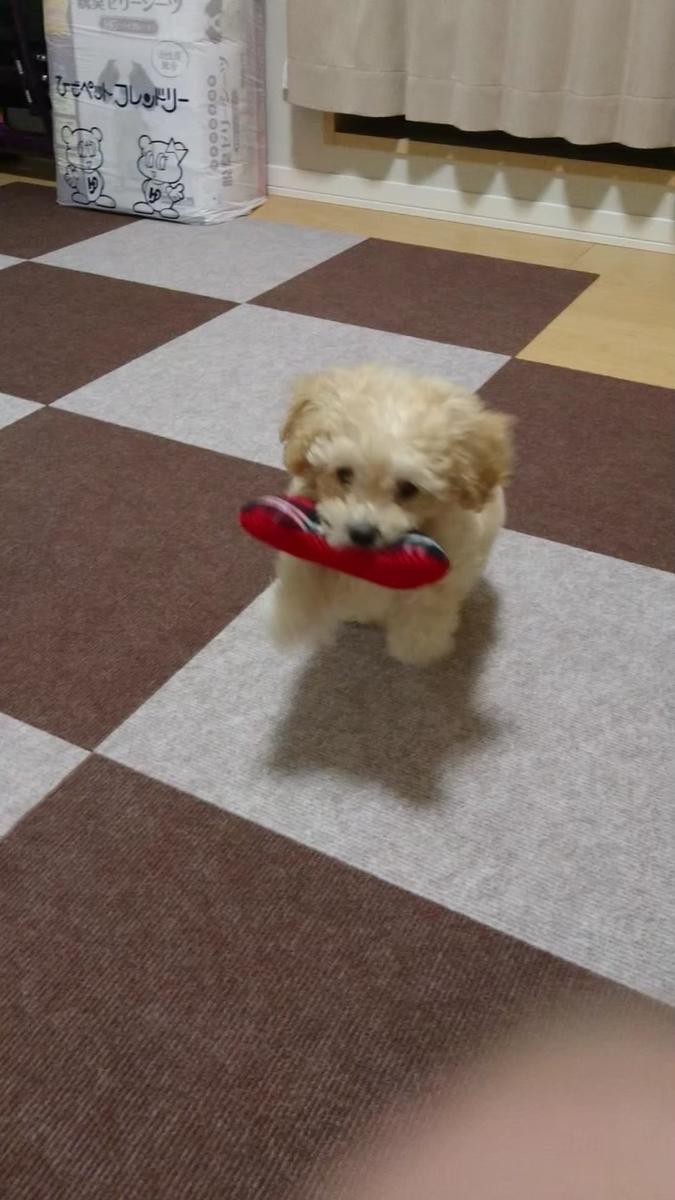 f:id:kotaro-dog:20210620013816j:plain