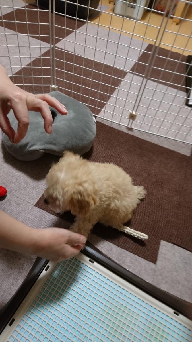 f:id:kotaro-dog:20210620015640j:plain