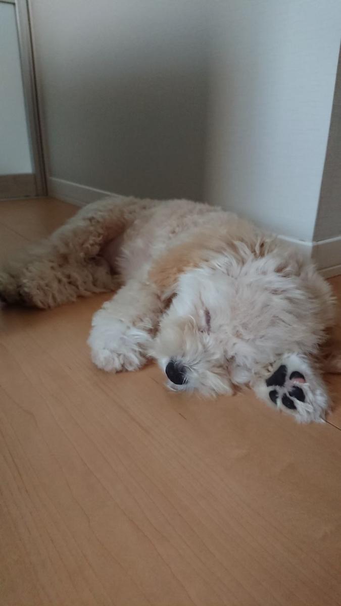 f:id:kotaro-dog:20210620024035j:plain