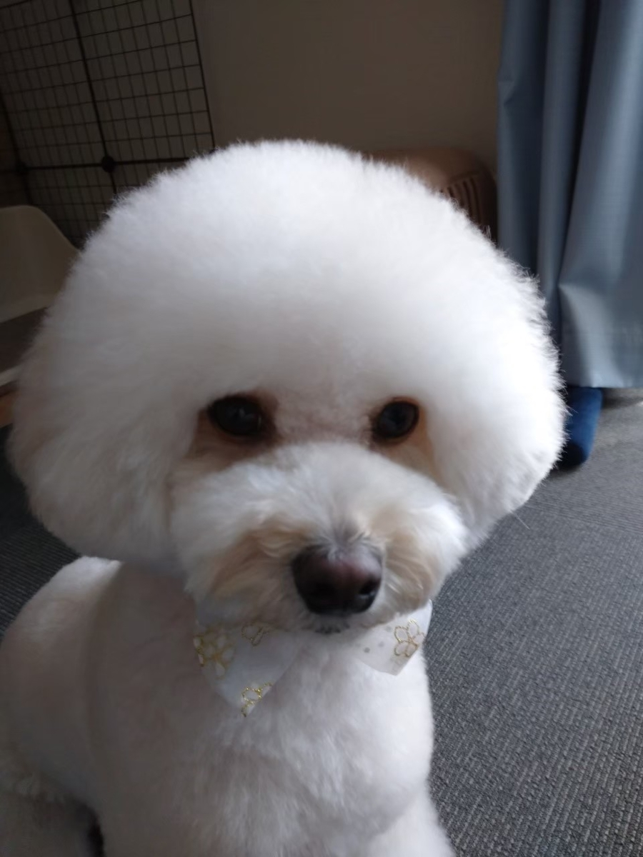 f:id:kotaro-dog:20210620030640j:plain