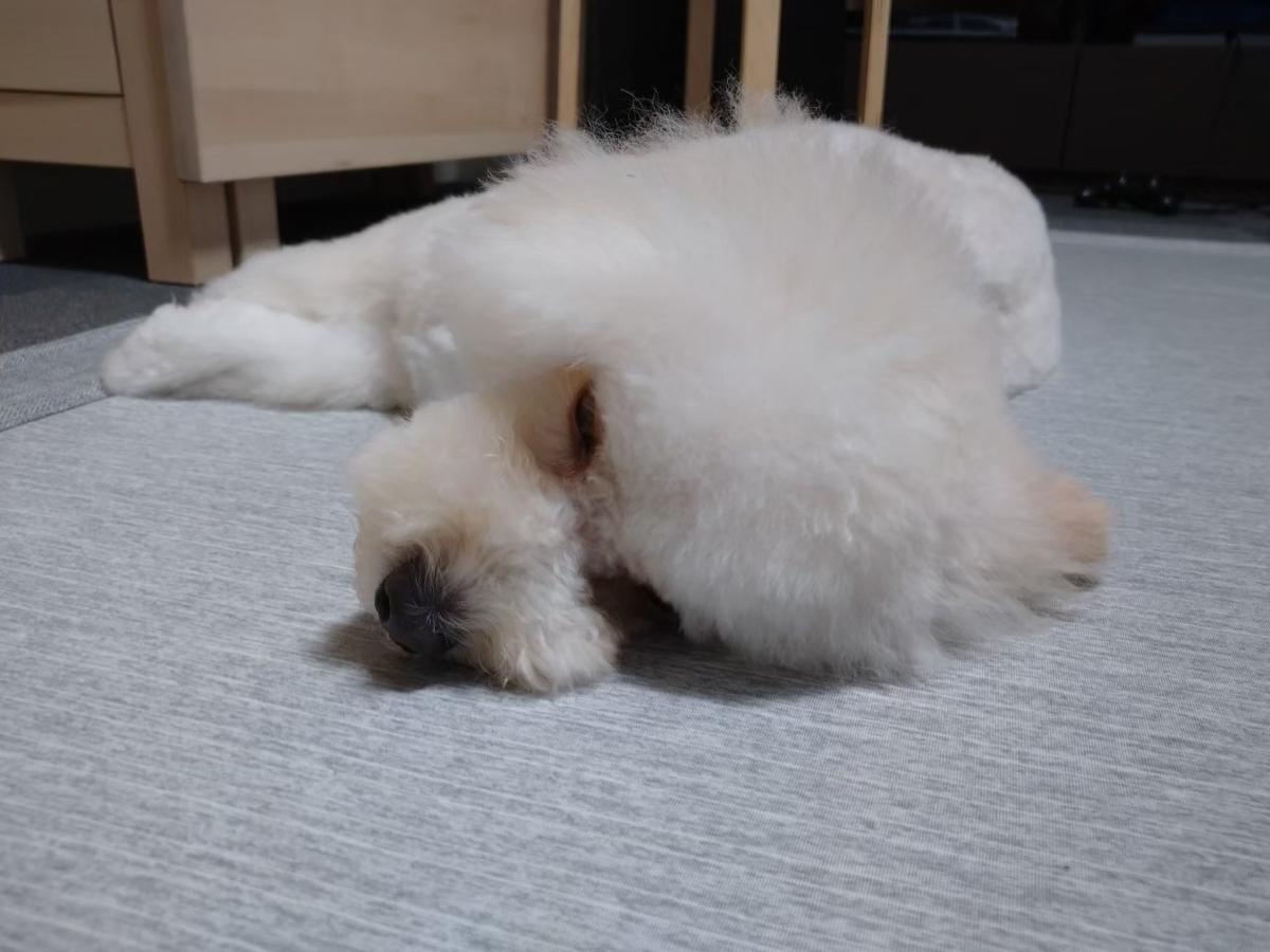 f:id:kotaro-dog:20210620200331j:plain