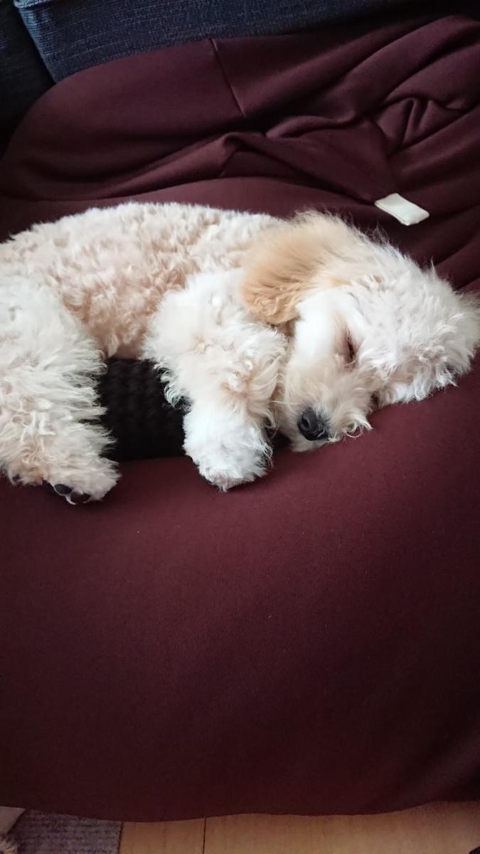 f:id:kotaro-dog:20210620211611j:plain