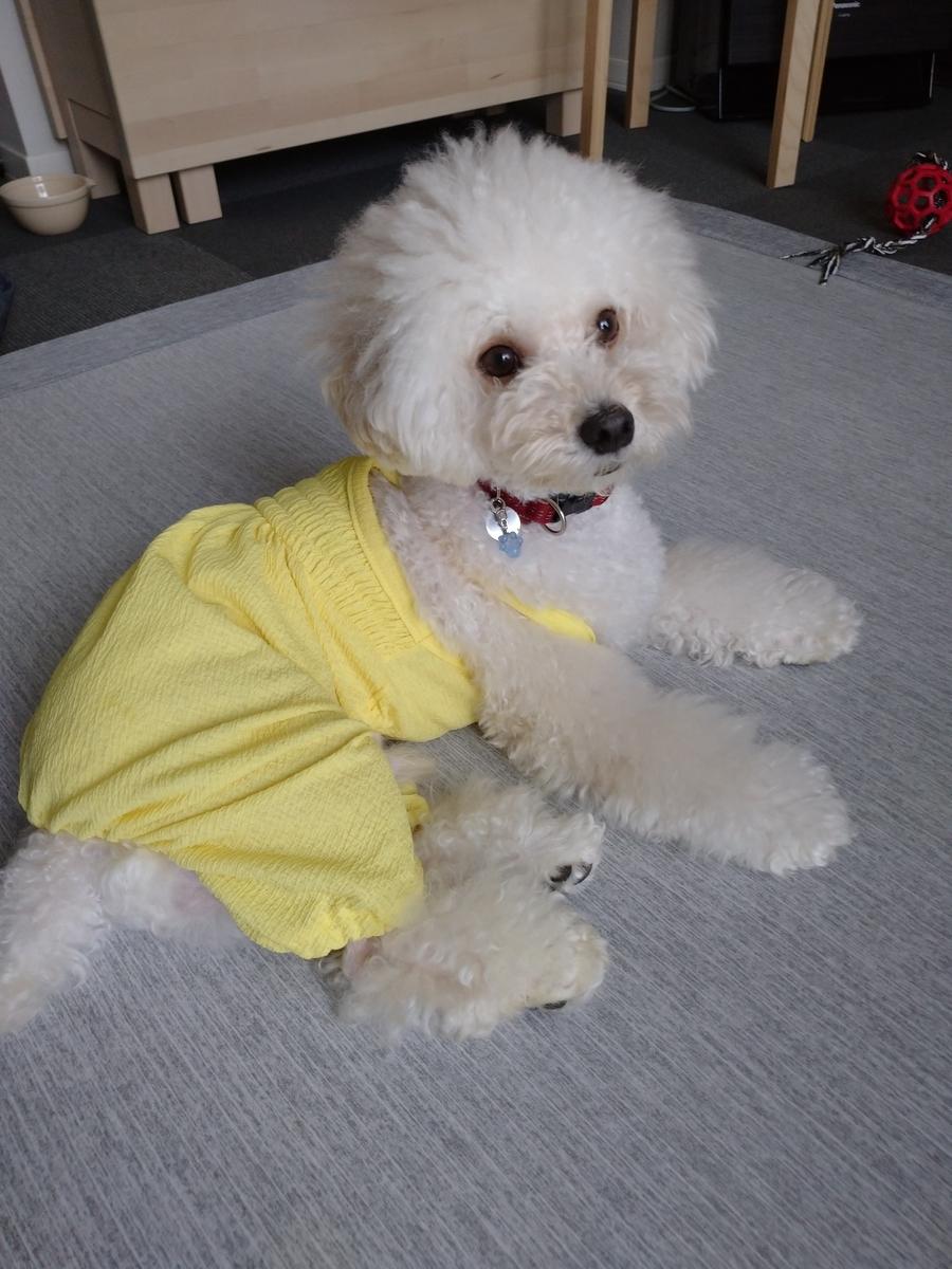 f:id:kotaro-dog:20210703010141j:plain