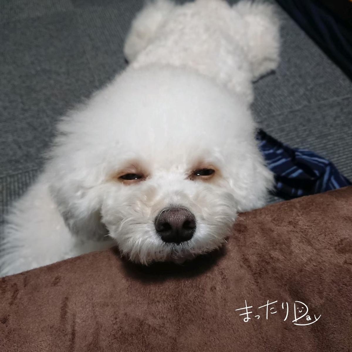f:id:kotaro-dog:20210703190754j:plain