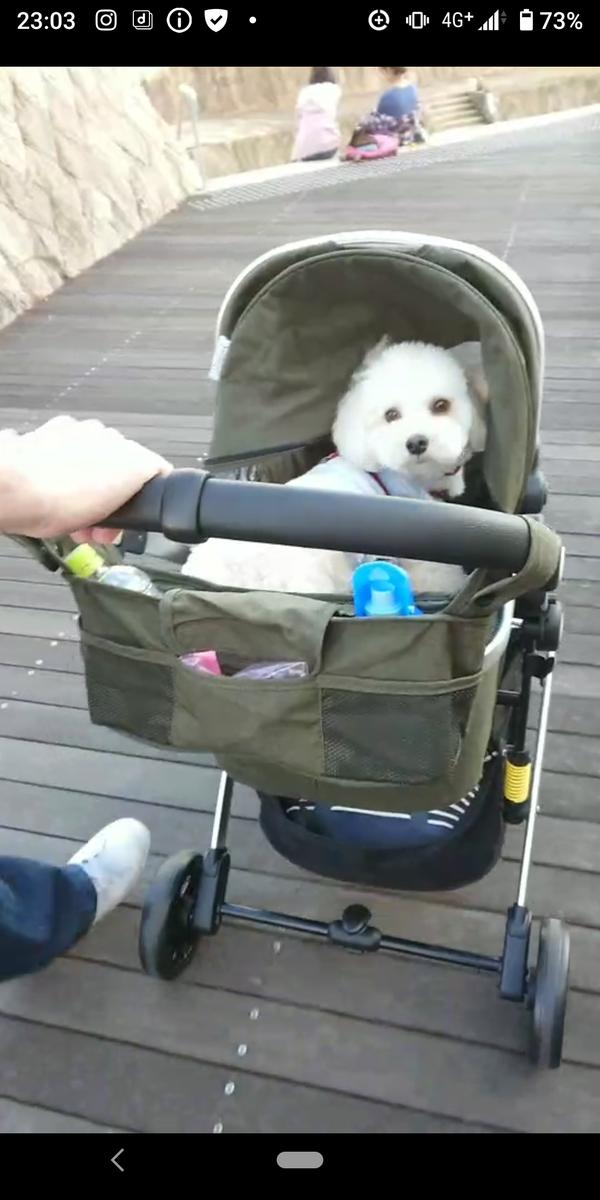 f:id:kotaro-dog:20210705231055p:plain
