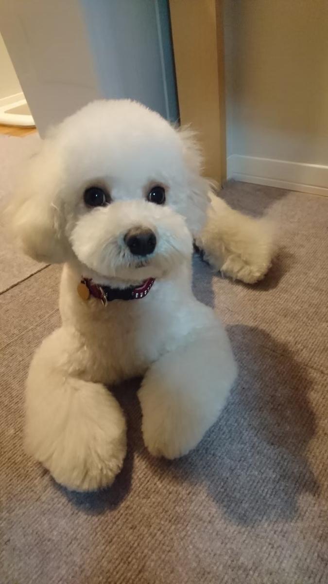 f:id:kotaro-dog:20210707224051j:plain