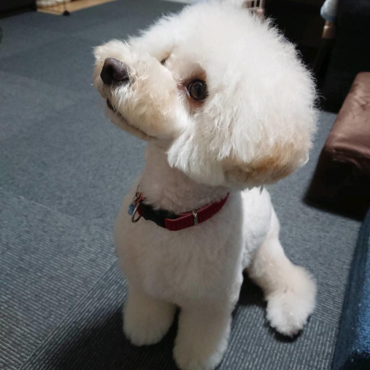 f:id:kotaro-dog:20210709003339j:plain