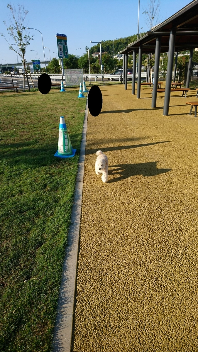f:id:kotaro-dog:20210709214531j:plain