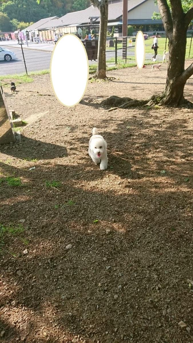 f:id:kotaro-dog:20210709222214j:plain