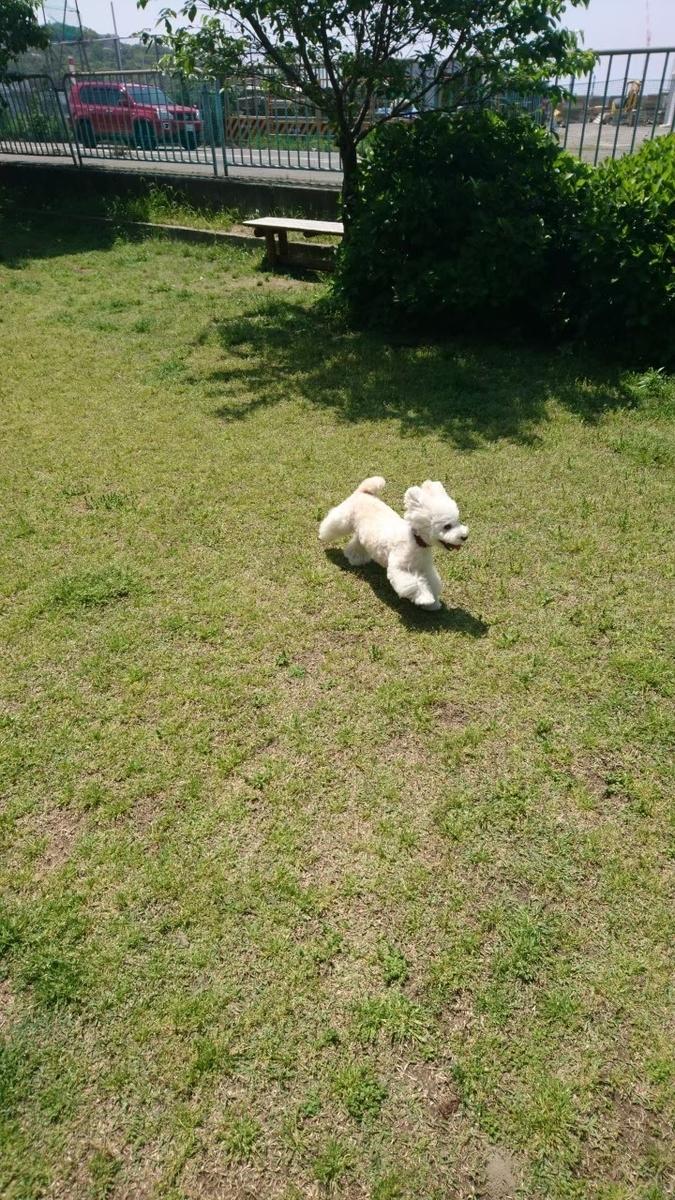 f:id:kotaro-dog:20210709224545j:plain