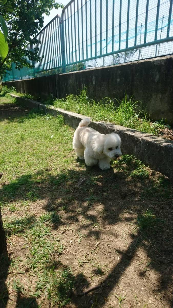 f:id:kotaro-dog:20210709224601j:plain