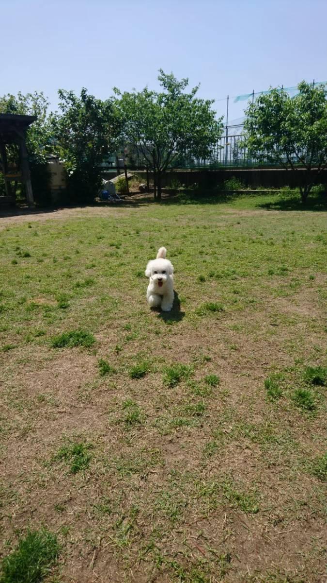 f:id:kotaro-dog:20210709224713j:plain