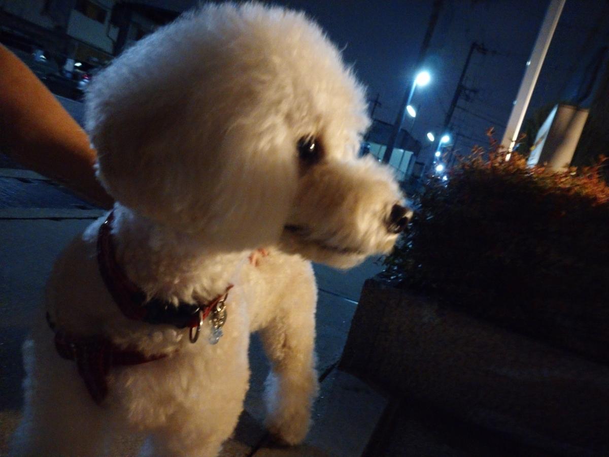 f:id:kotaro-dog:20210710222727j:plain