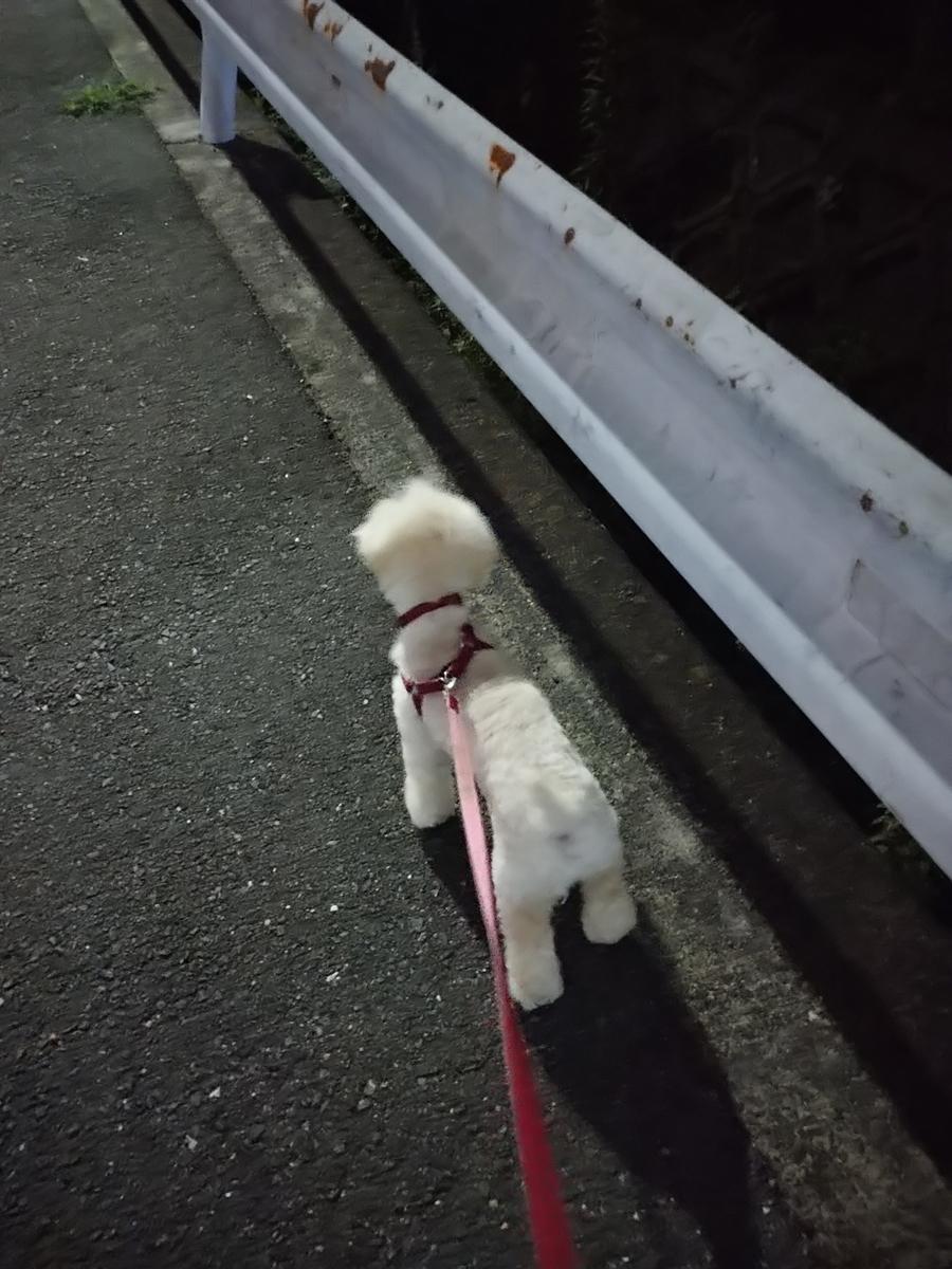 f:id:kotaro-dog:20210710223454j:plain