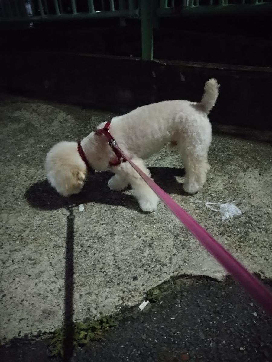 f:id:kotaro-dog:20210710223622j:plain
