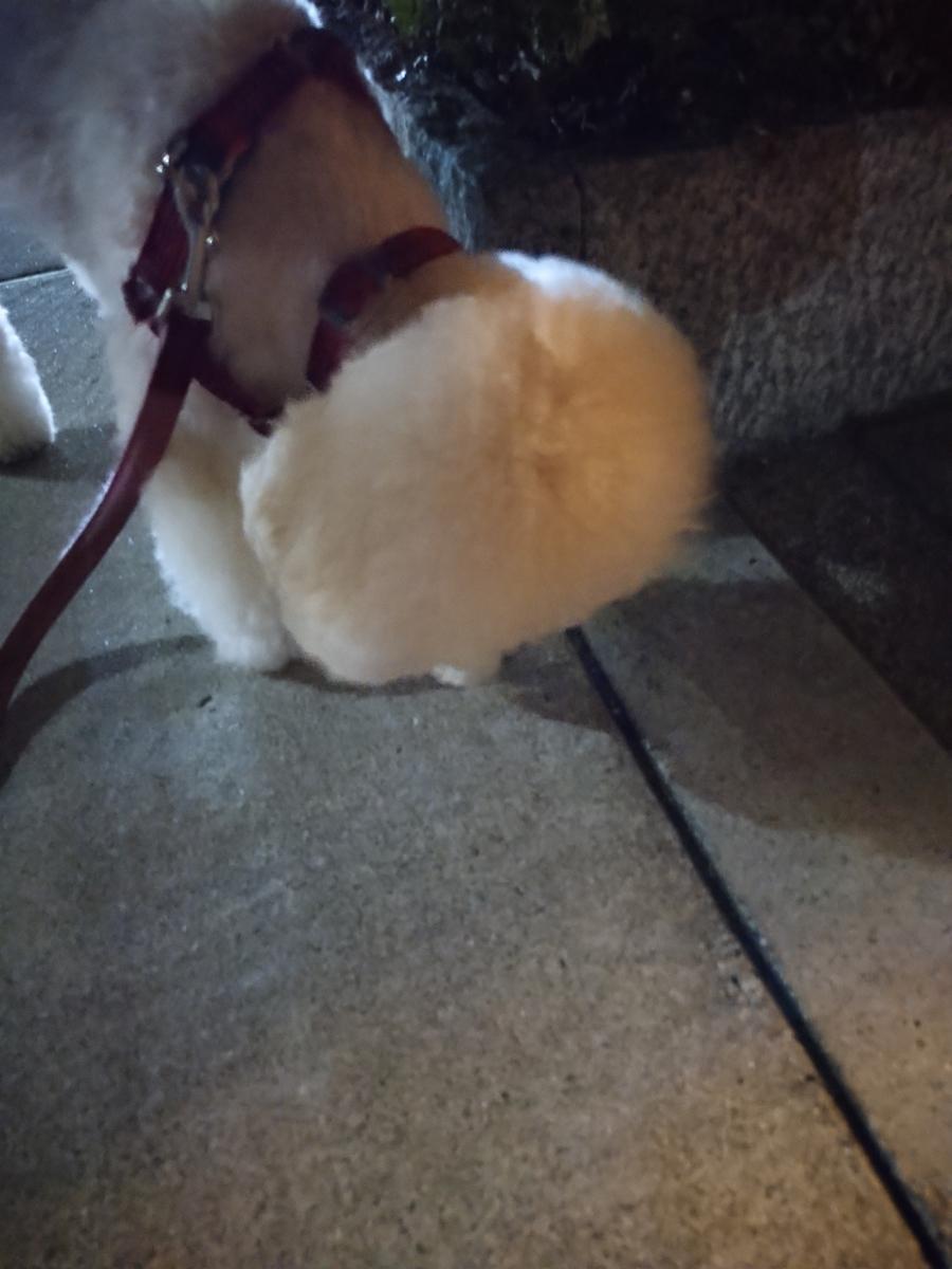 f:id:kotaro-dog:20210710223710j:plain
