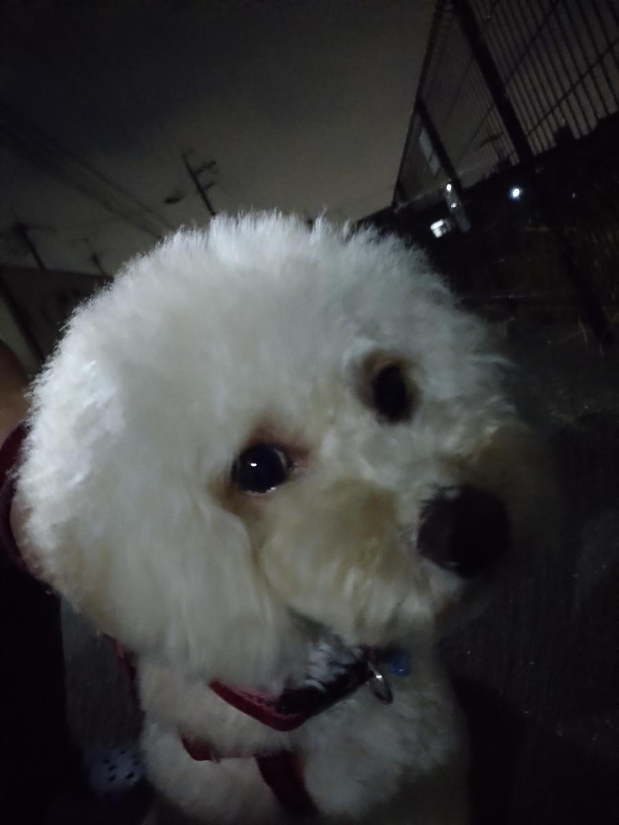 f:id:kotaro-dog:20210710224459j:plain