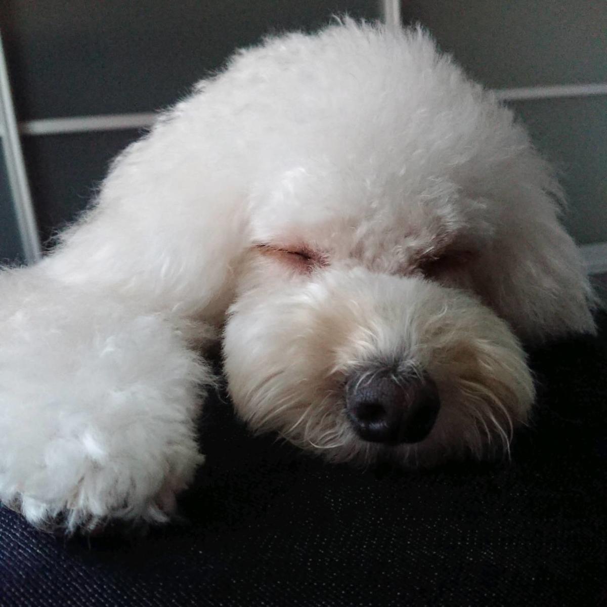 f:id:kotaro-dog:20210711211752j:plain
