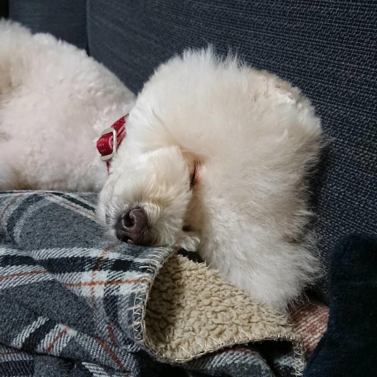 f:id:kotaro-dog:20210711214941j:plain